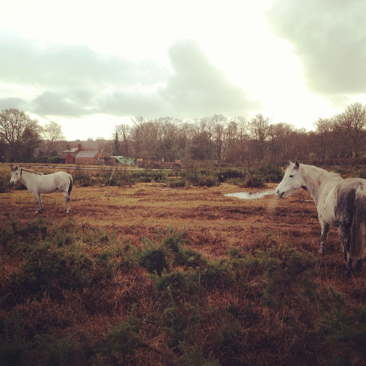 Forest horses