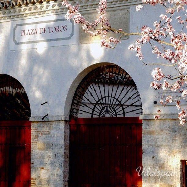 vitalspain - #フォト #個人#街 #スペイン #旅行 #歩く #街歩き #写真 #春 #アーモンド #カスティーリャ #闘牛場 #Toro #spain #plaza #travel #viajes #castillayleon #zamora  アーモンドの花の開花が春の知らせの配達人。もうすぐ公園、街、野山がアーモンドの花で満開に。