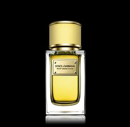 Dolce&Gabbana Velvet Mimosa Bloom. Pure scent of Mimosa whit precious Citrus Oils, of Mandarin and Bergamot and Neroli Oil. The pure scent of woman has an unmistikable trail, gracious and persistent and evoke the warmt a Mediterranean Spring. An homage to women in its semplicity and light.