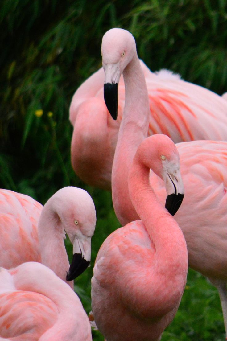 Photograph Flamingos by Bee Kay on 500px