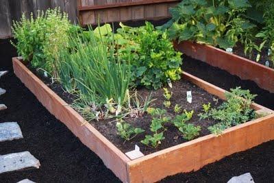 veggie garden <3