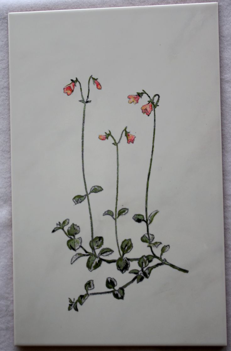 Twinflower engraved and painted to ceramic tile
