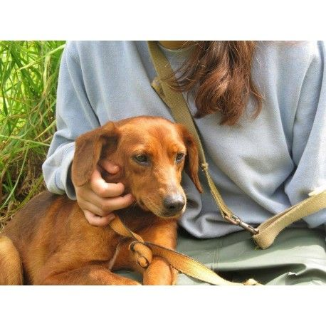 Simba es una hembra recogida en Rianxo, junto a otros 18 perros en una casa con síndrome de noe. Es una perrita de tamaño medio con un poco de miedo debido a lo mal que lo ha pasado pero a la que le pierden los mimos. Es sociable con otros perros. Le encanta salir de paseo y  necesita una persona con un poco de paciencia y mucho cariño para que coja confianza y pierda su miedo.