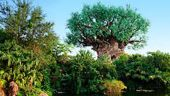 WDW_Parks_Listing_Animal_Kingdom.JPG