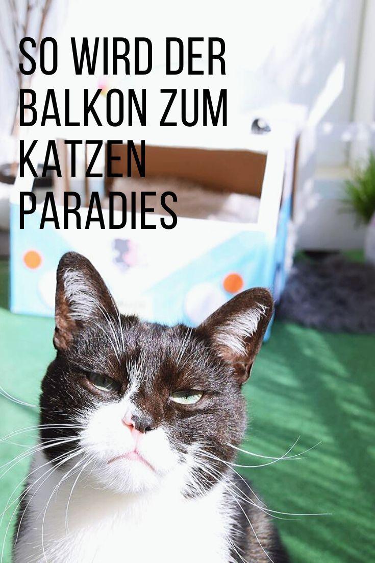 So Wird Der Balkon Zum Katzenparadies Mit Felix Soup In 2020 Mit