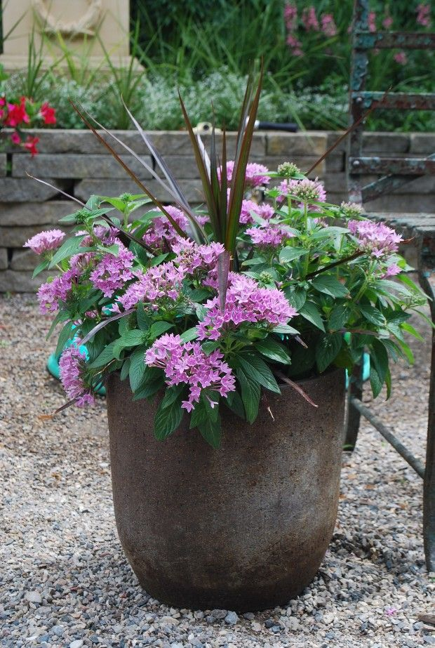 Find This Pin And More On Container Gardening By Sharylbussen.