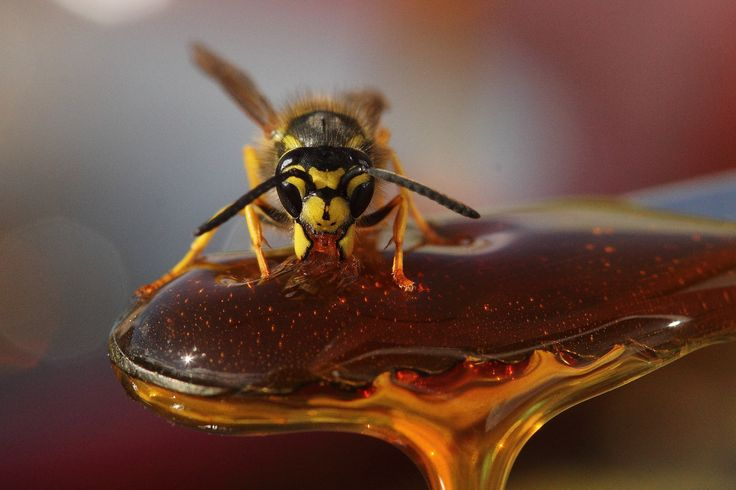 Photo Honey trap... by Pierre Anex on 500px