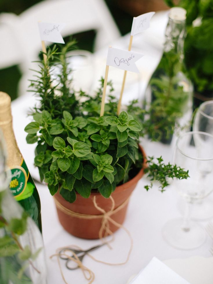 How to Make DIY Herb Pot Centerpieces and Party Favors | how-tos | DIY