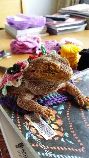 """Oh puh-lease! What does a beardie have to do to get fed round here??!!"" Carl, modeling crochet!"