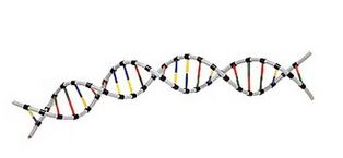 BEGINNERS GUIDE TO GENETIC GENEALOGY - WHEATON SURNAME RESOURCES