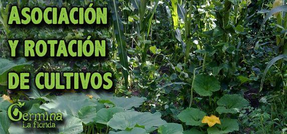 Germina La Florida: Asociación y Rotación de Cultivos
