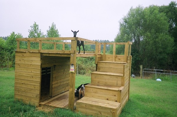 This is a good looking Goat House.  It gives the goats shelter, a place for dry food, and a place to climb.