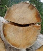 detail, round, wood, ends, textures