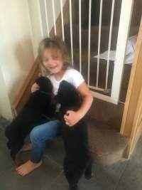 Sabrosos cachorros Rottweiler macho y hembra listos para el contacto de adopción para más informació (madrid)