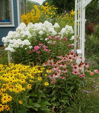 209 best perennial flowers images by gardening dig it on