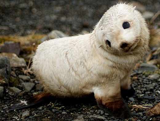 baby animals also communicate with body language and expressions