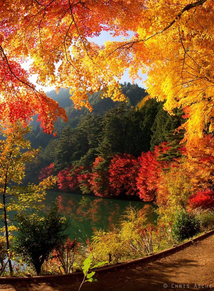 Changin leaves of Japan at Inagakko Lake in Fall - Yamanashi, Japan