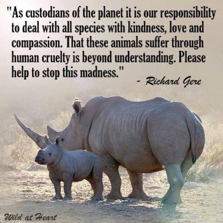 Animal rights...we are running out of time....