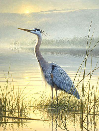 blue heron images free