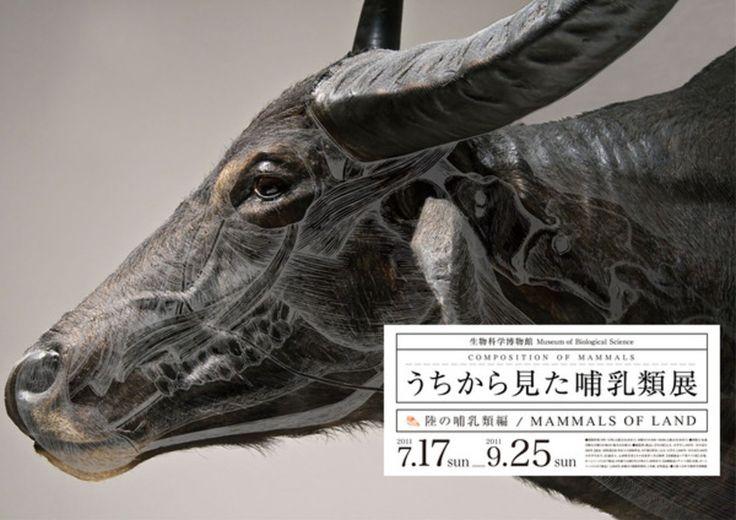Wataru yoshida composition of mammals