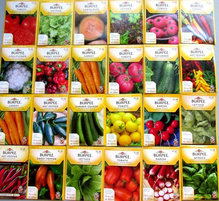 Burpee Seeds  *   Vegetable  24 NEW Packets , Packaged for 2015 FREE Shipping.