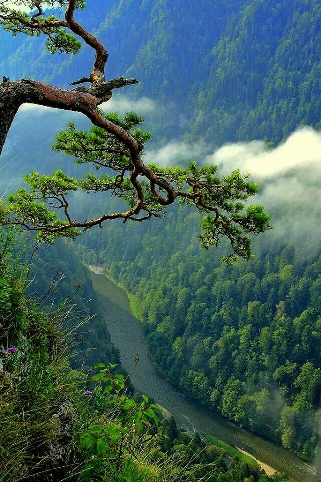 Poland, Pieniny Mountains / Polska, Pieniny