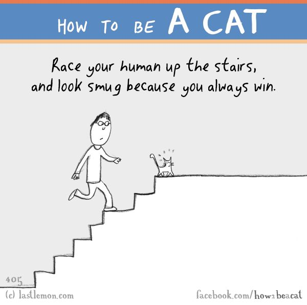 Cats: HOW TO BE A CAT: Race your human up the stairs, and look smug because you always win.