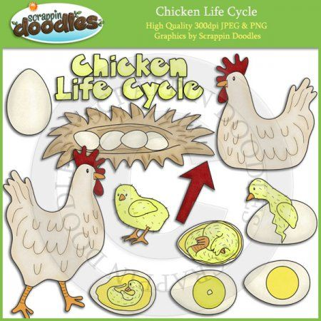 Chicken Life Cycle Clip Art Download - Click Image to Close