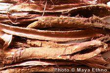 Erowid Mimosa (Jurema) Vault