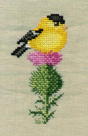 Goldfinch on thistle ♥
