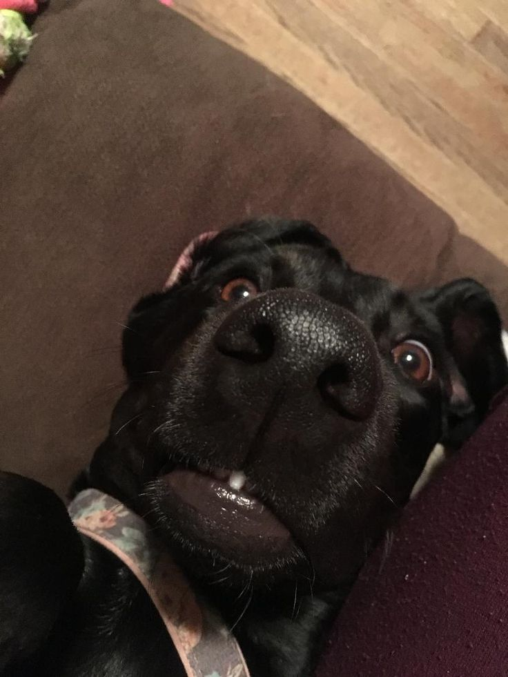 This is Bugg. We call her Uggy Buggy because she's the most unphotogenic pup on earth. #cute #dogs #dog #aww #puppy #adorable