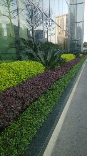 Plant feature