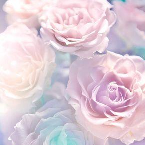 Weiche Rosen Hintergrund