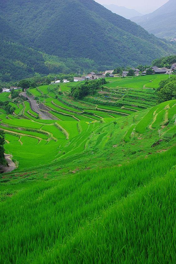 青々とした景色が広がる。中山千枚田の観光スポット。
