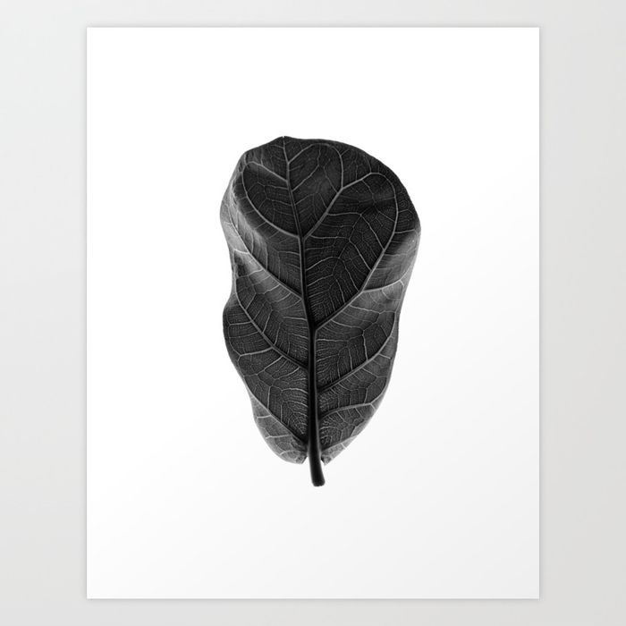 Monochrome, Fiddle Leaf Fig Tree, ©Pernilla Hed
