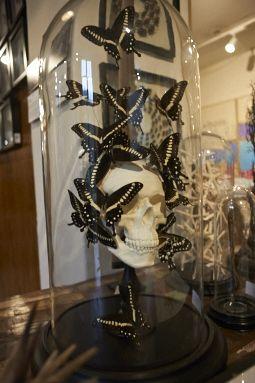 Butterfly Skull #TMOtrendevent