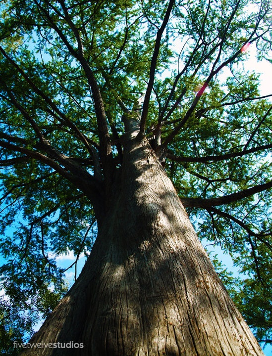 Canopy - www.facebook.com/512studios #nature #flowers #trees