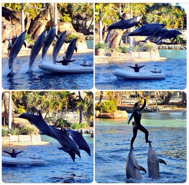 SeaWorld, Gold Coast, Dolphins