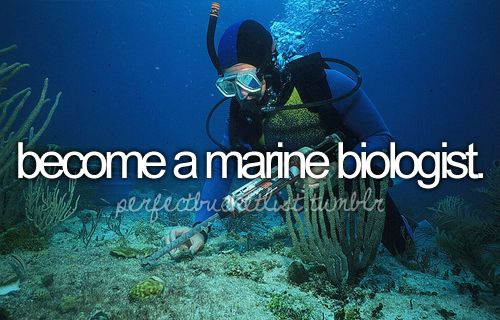 Become a marine biologist <3       this is probably the top thing on my bucket list.
