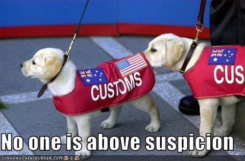 No one is above suspicion, dog funny