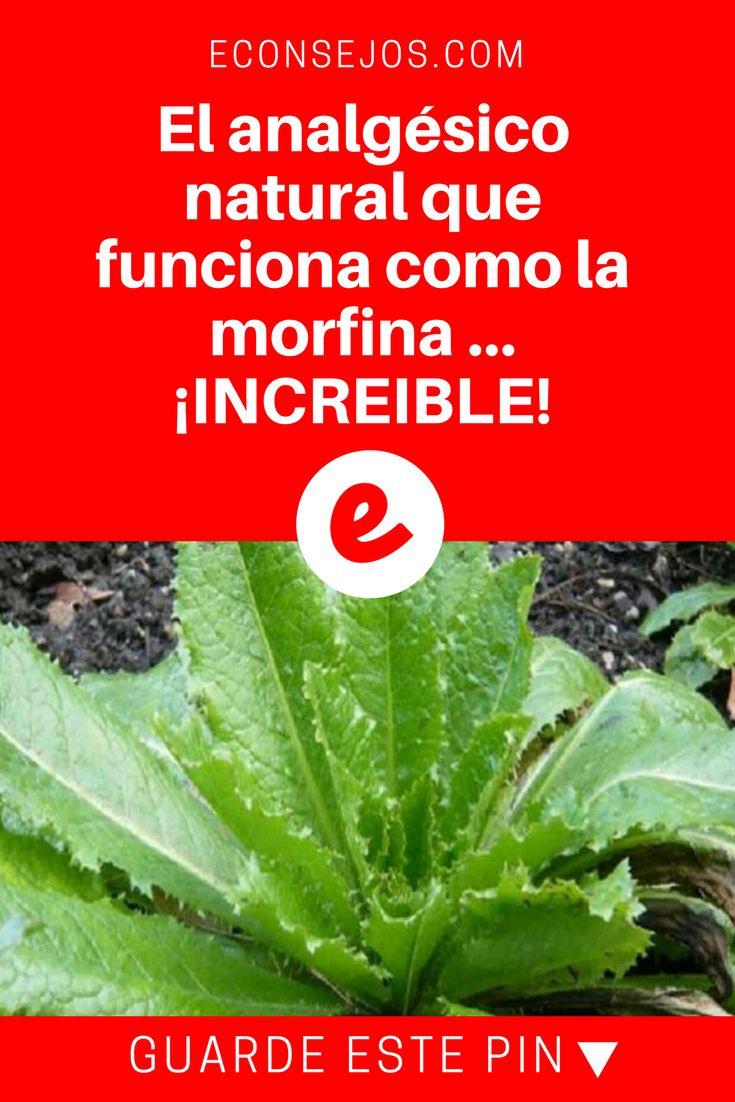 Analgésico natural   El analgésico natural que funciona como la morfina ... ¡INCREIBLE!