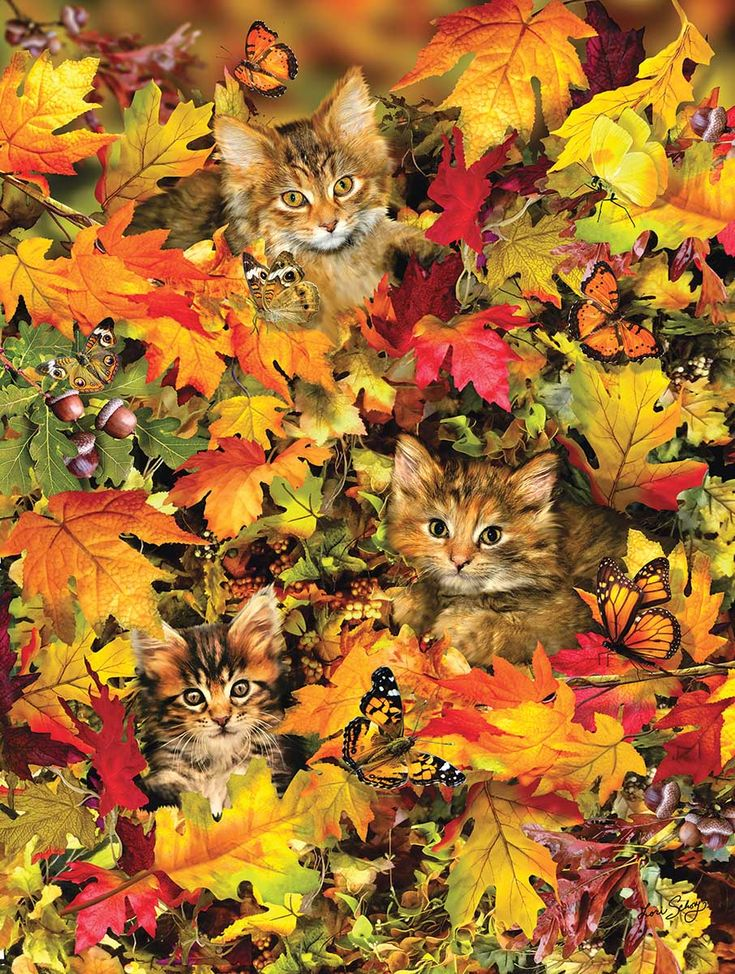 Kitties at Play, 300 Pieces, SunsOut Puzzle Warehouse in