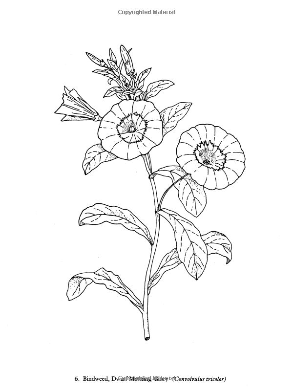 Color Your Own Great Flower Prints (Dover Art Coloring Book) Charlene Tarbox. Buscar browser deposit mission device puede Plano electric