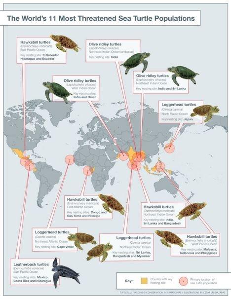 11 Most Threatened Sea Turtle Populations