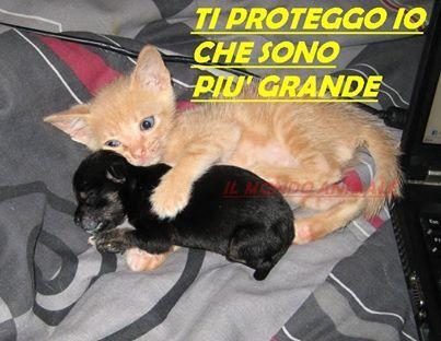 Amore tra cani e gatti