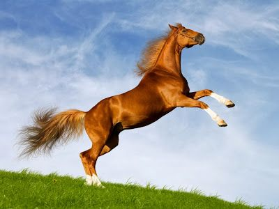 13 best hd wallpapers desktop horse free images on pinterest horse page page hd wallpapers images backgrounds voltagebd Choice Image