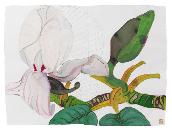 Sarah Graham, botanical artist