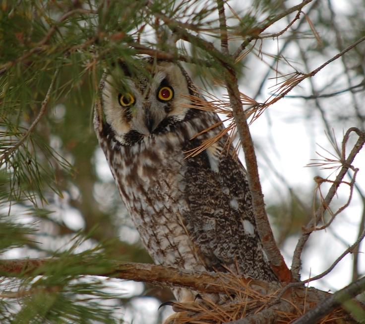 Owl at Lake Diefenbaker, Saskatchewan