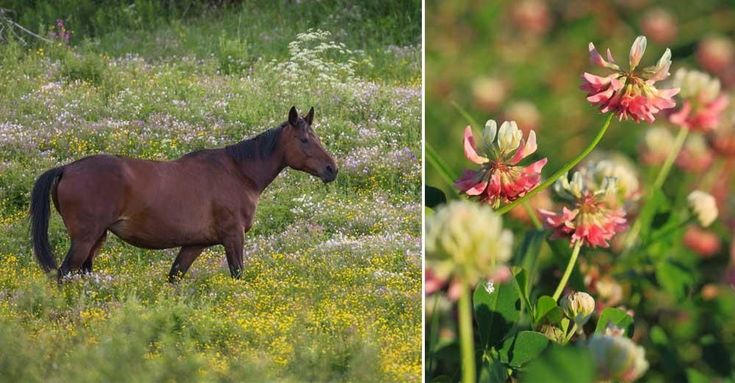 Här är giftiga växten du ska se upp med i hästens hage | LAND.se