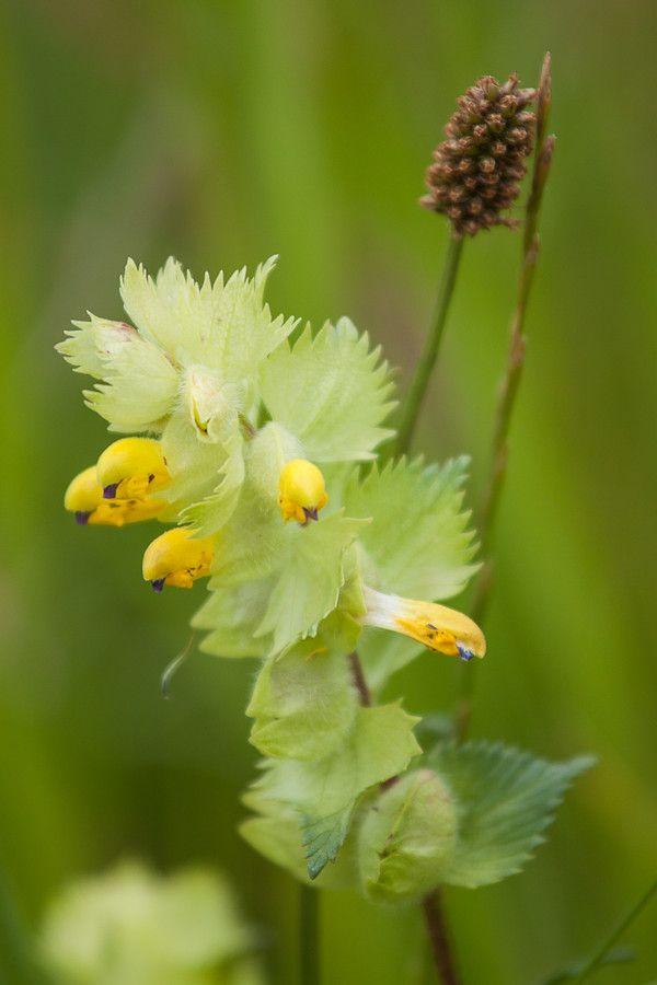 Wild flower by Rob Janssen on 500px